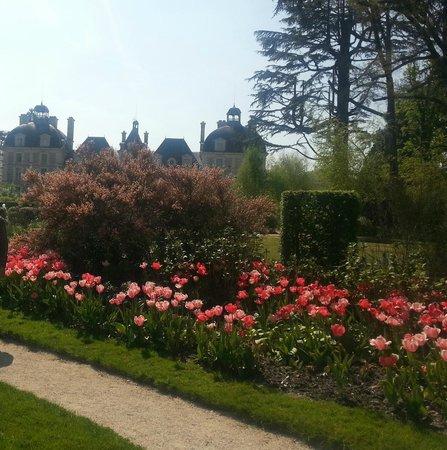 Château de Cheverny : Cheverny. Avril 2014