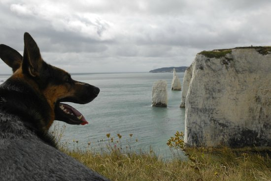 Old Harry Rocks : Our dog with rocks