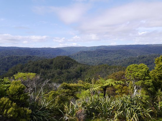 Tane Mahuta Walk: View of Waipoua Forest from lookout