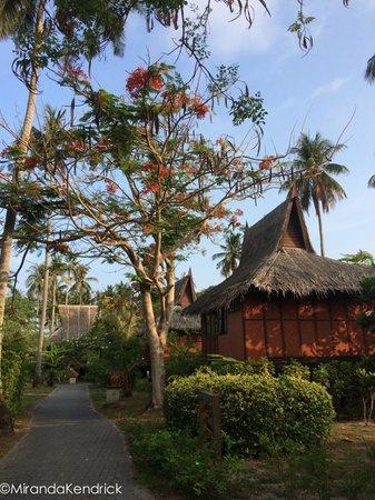 Phi Phi Island Village Beach Resort : outrigger phi phi rooms