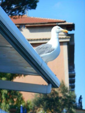 Grand Hotel Riviera: Mouette ...aux aguets...