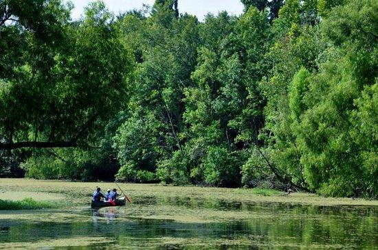 Lake Fausse Point State Park : Vue de la terrasse