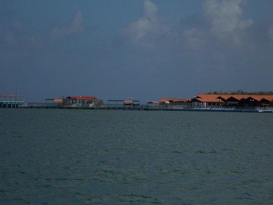 Dolphinarium, Cayo Naranjo: Dolphinarium