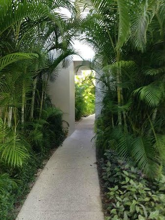 "Luxury Bahia Principe Sian Ka'an Don Pablo Collection: The walkways have a ""jungle"" feel"