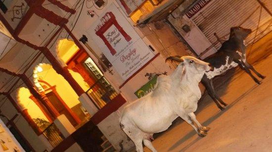King's Retreat Jodhpur: Entrée de l'hotel