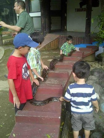 Beautiful Indonesia in Miniature Park: Snake, safer than Komodo