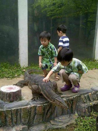 Beautiful Indonesia in Miniature Park: reptile park, here, its not Komodo... it is Lizard