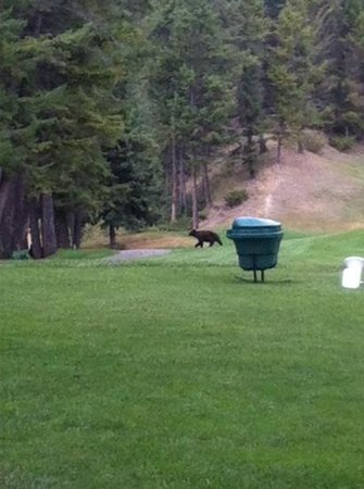 Hoodoo Lounge & Grill: Mama bear chasing after her 3 cubs on hole#15 at Fairmont Mountainside GC.