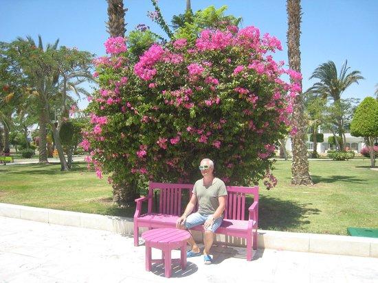 The Grand Hotel Hurghada: На территории отеля
