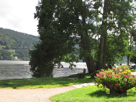Lake Titisee: natura