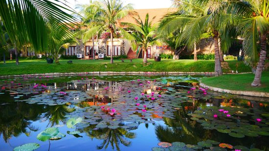 Pandanus Resort: пруд на территории отеля