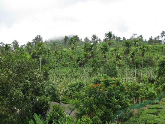 Kallat Heritage: plantation