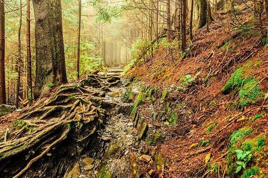 Charlies Bunion: Appalachian Trail to the Bunion