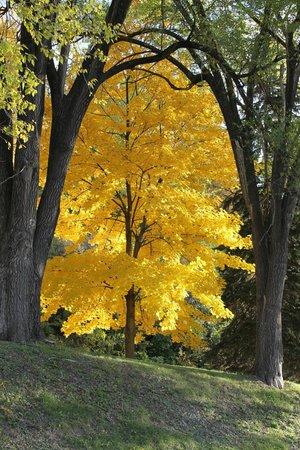 Fall Color In ALMA