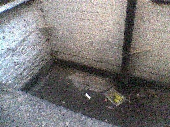 Bayswater Inn: Vue de la chambre : fosse en béton pleine d'eau et d'ordures