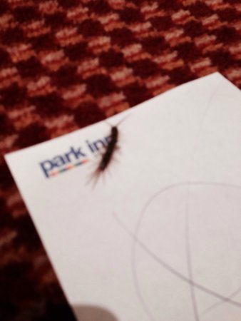 Park Inn by Radisson Cardiff City Centre: Our unexpected room guest