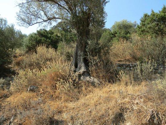 Ta Tria Adelfia: albero