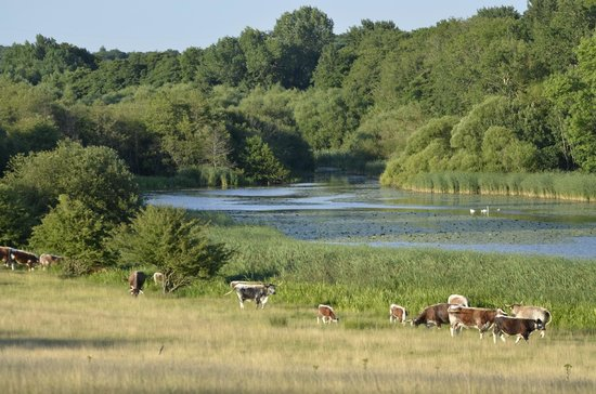 Knepp Wildland Safaris - Day Tours