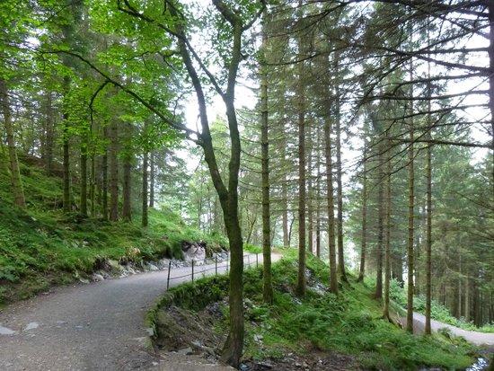 Mount Floyen and the Funicular (Floibanen): Abstieg