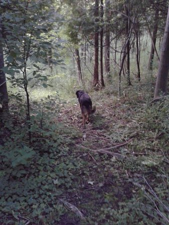Island View B&B : Walking the trails on the property with Mocha