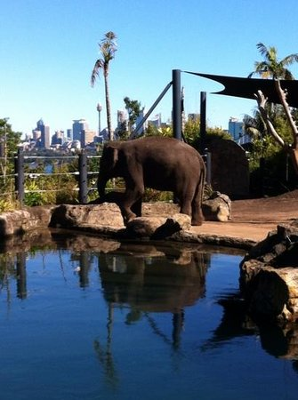 Taronga Zoo : city skyline