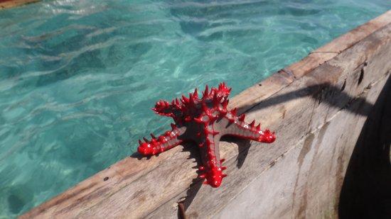 Hakuna Majiwe Beach Lodge: Stelle Marine