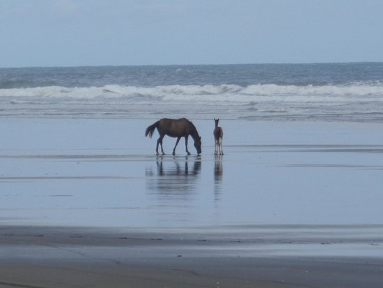 Hotel Playa Bejuco: Playa muy tranquila