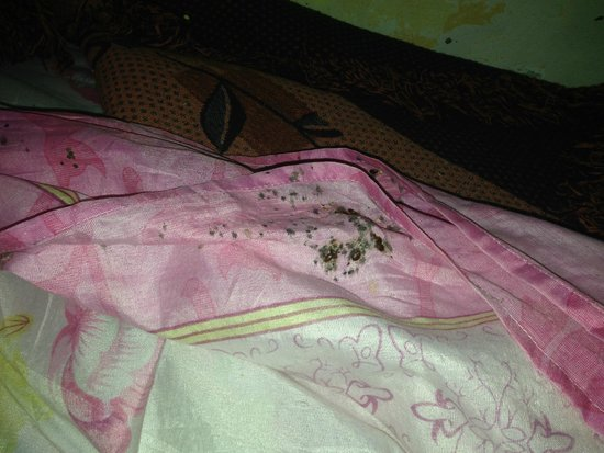 Hostel Riad Mama Marrakech: bed bugs holy bed bugs