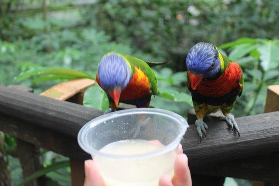 Jurong Bird Park: divers