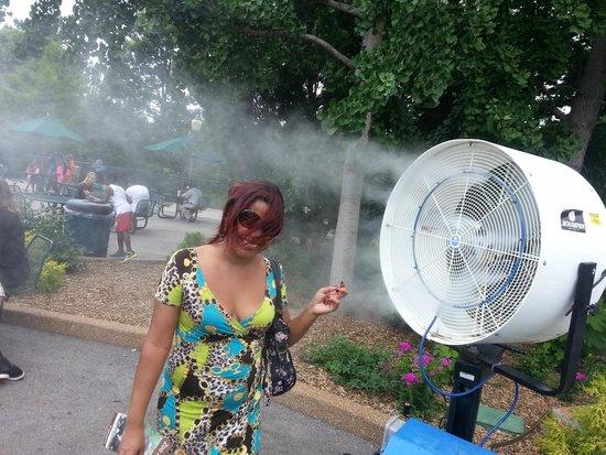 St. Louis Zoo: En el verano perfecto para el calor