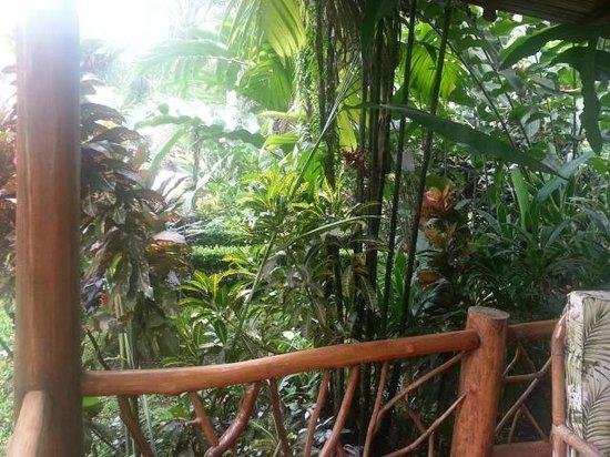 Hotel La Palapa Eco Lodge Resort: Areas verdes de paseo