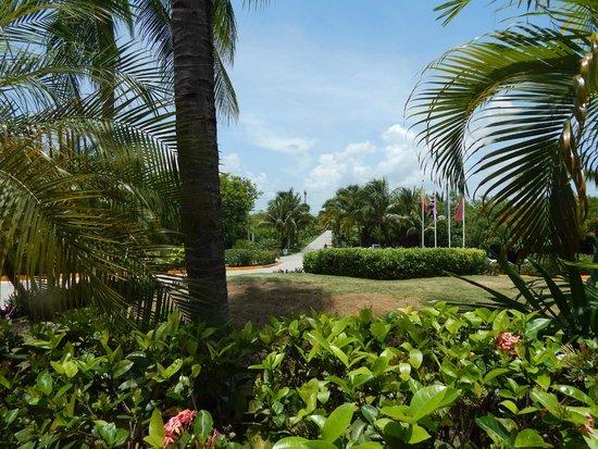Ocean Maya Royale: The driveway