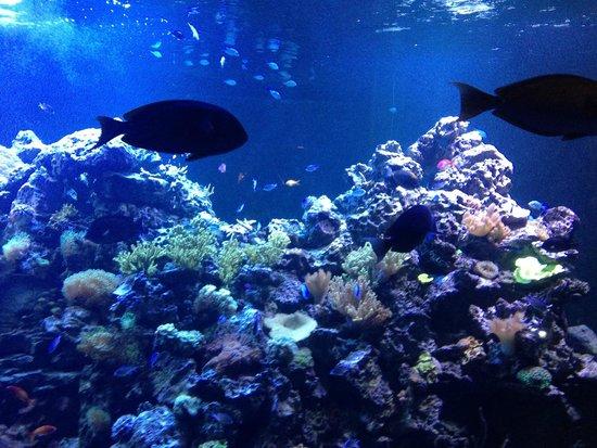 Sharks In The Aquarium Picture Of Virginia Aquarium