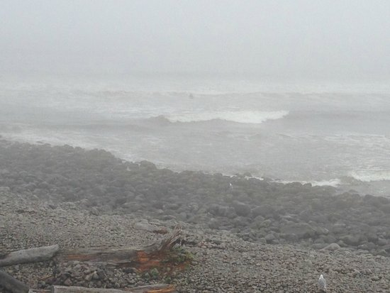Lanai at the Cove: A would-be surfer braves the rough sea, cold water, and fog