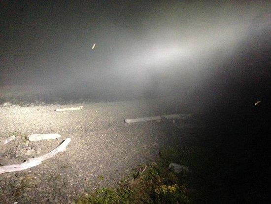 Lanai at the Cove: Lanai's lights illuminate the fog as it rolls in