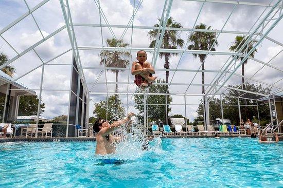 Lazydays RV Resort : Heated Pool