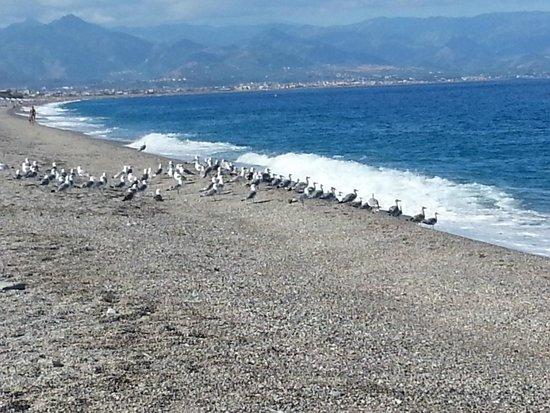 Albergo Esperia: Mare di Milazzo e gabbiani pronti alla partenza