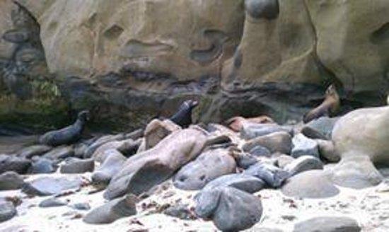 The Bed & Breakfast Inn at La Jolla : Lounging Sea Lions