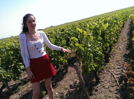 Bordovino Wine Tasting Day Tours : Medoc grapes!