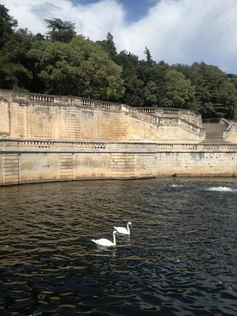 Jardins de la Fontaine : Swans at the fontaine