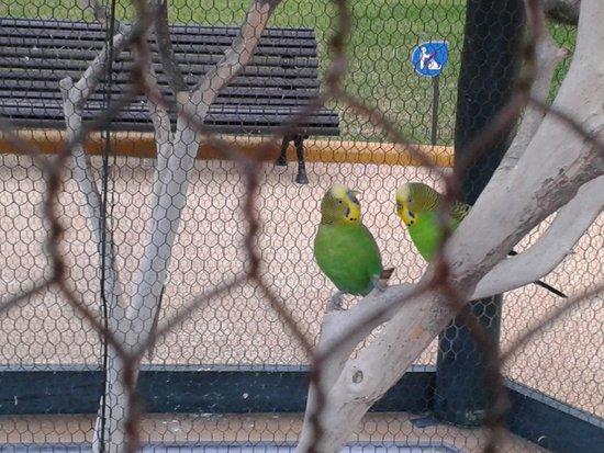 Porto Mare Hotel: Beautiful birds near the pool