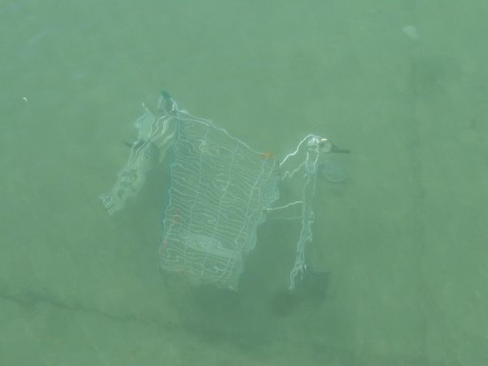 Lac d'Annecy : Shopping trolly in lake near old prison