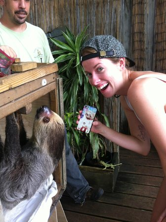 Safari Edventure: SlothCeption