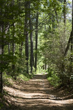 Highland Lake Inn & Resort Hendersonville: Walking trails on 26-acres