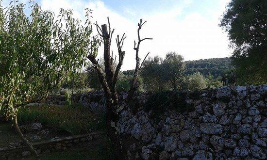 Agriturismo Il Caggio: Vista oliveta