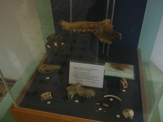 Cueva del Milodon: el museo muy breve