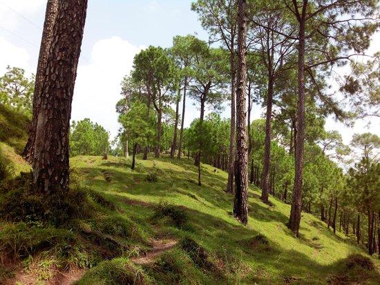 Khetarpal Marg: sanavar breezy hill