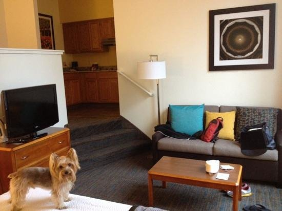 Hartford Marriott Downtown: emmitt in our room