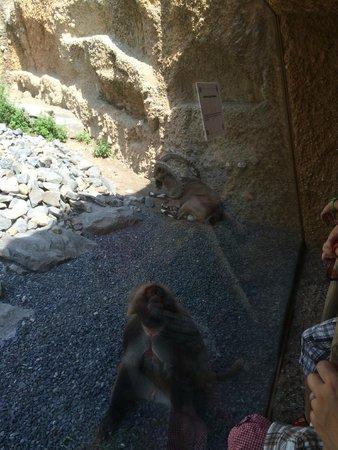 Zoo Zurich: where