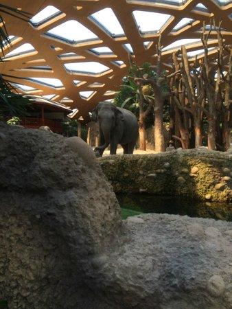 Zoo Zurich: zoo